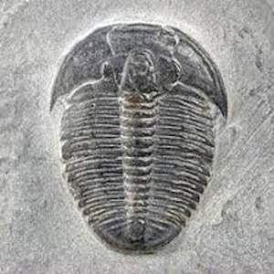 2017 September Trilobiten